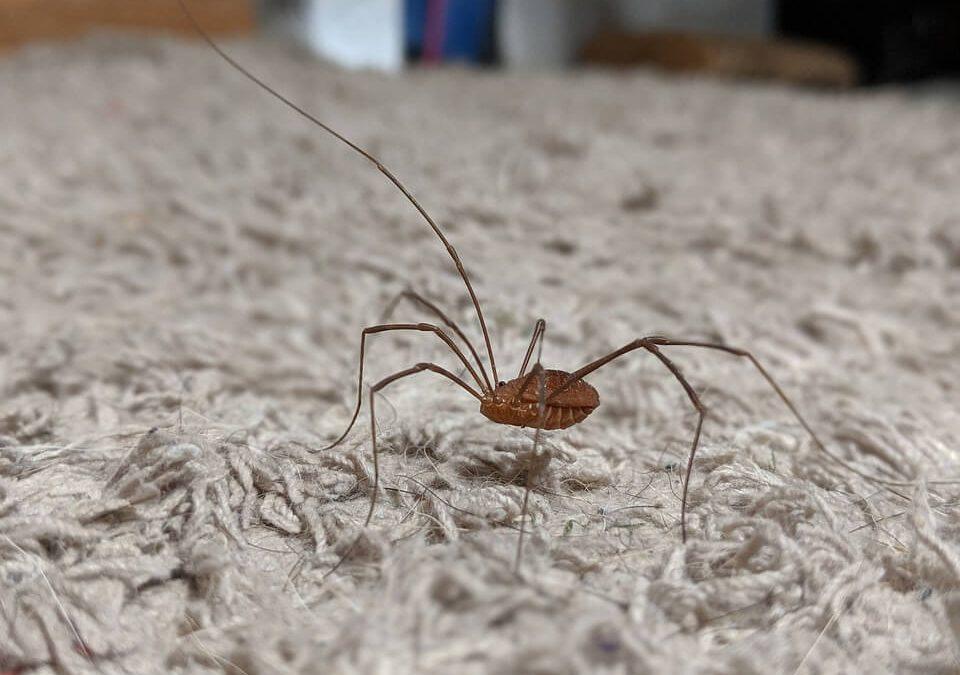 Basement Bugs Identification