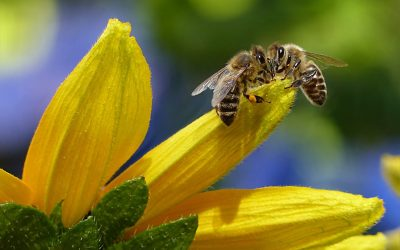 Spring Has Sprung – Be Sure You Don't Get Stung!