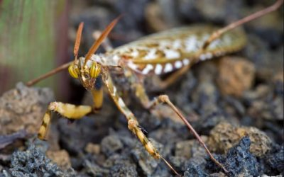 The World's Weirdest Insects – Part 1