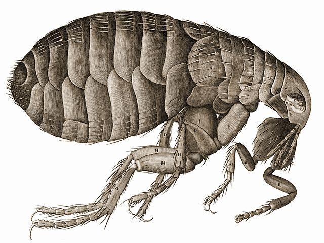 How Do I Get Rid of Fleas in My Yard?