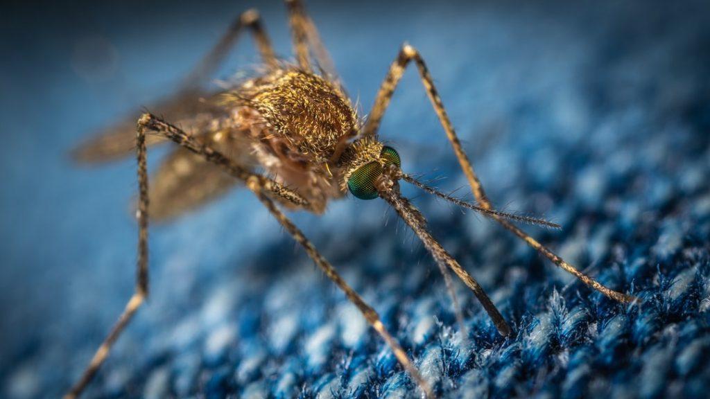 Mosquito Summer Pest