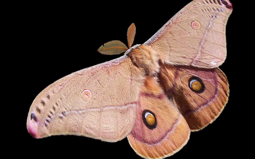 Moths in the House? Here's What to Do