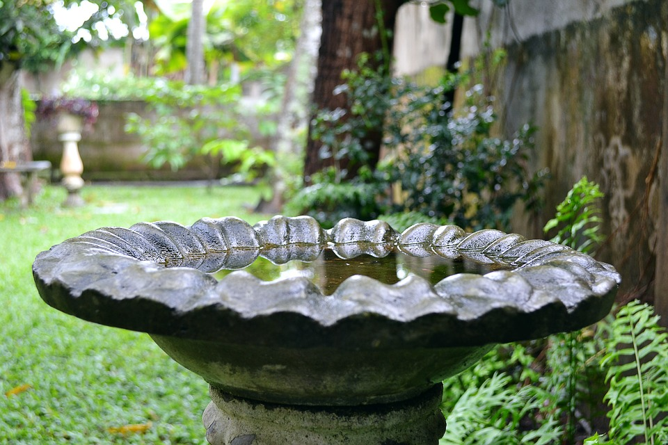 Standing Water in Bird Bath