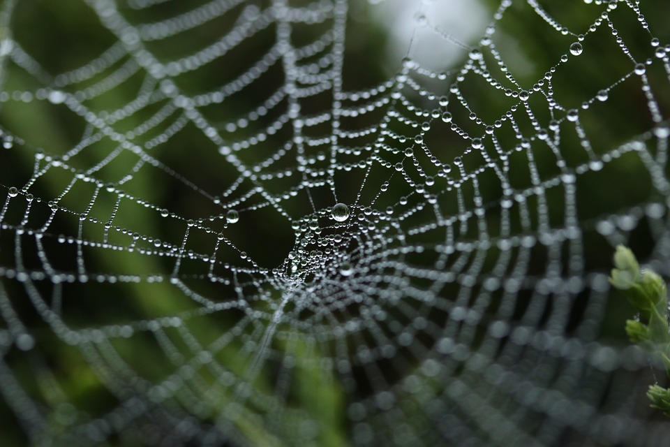 Web-Building-Spiders
