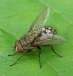 active-pest-control-cluster-flies