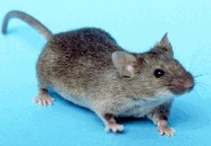 active-pest-control