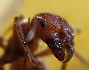 ant-pest-control