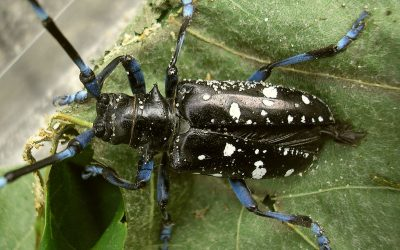 The Most Invasive Insects in Indiana