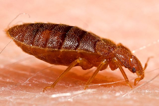 Heat Treatment for Bed Bugs Now Offered in Richmond Area