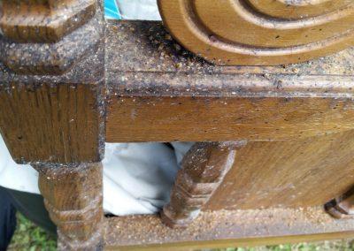 bedbugs on furniture