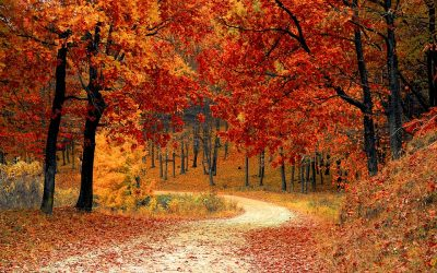 The Seasonal Changes of Fall Push Bugs Indoors – Part 1