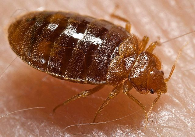 Bed Bugs in Institutions – Part 4