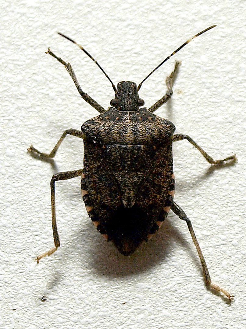 How to Get Rid of Stink Bugs – Once and for All!