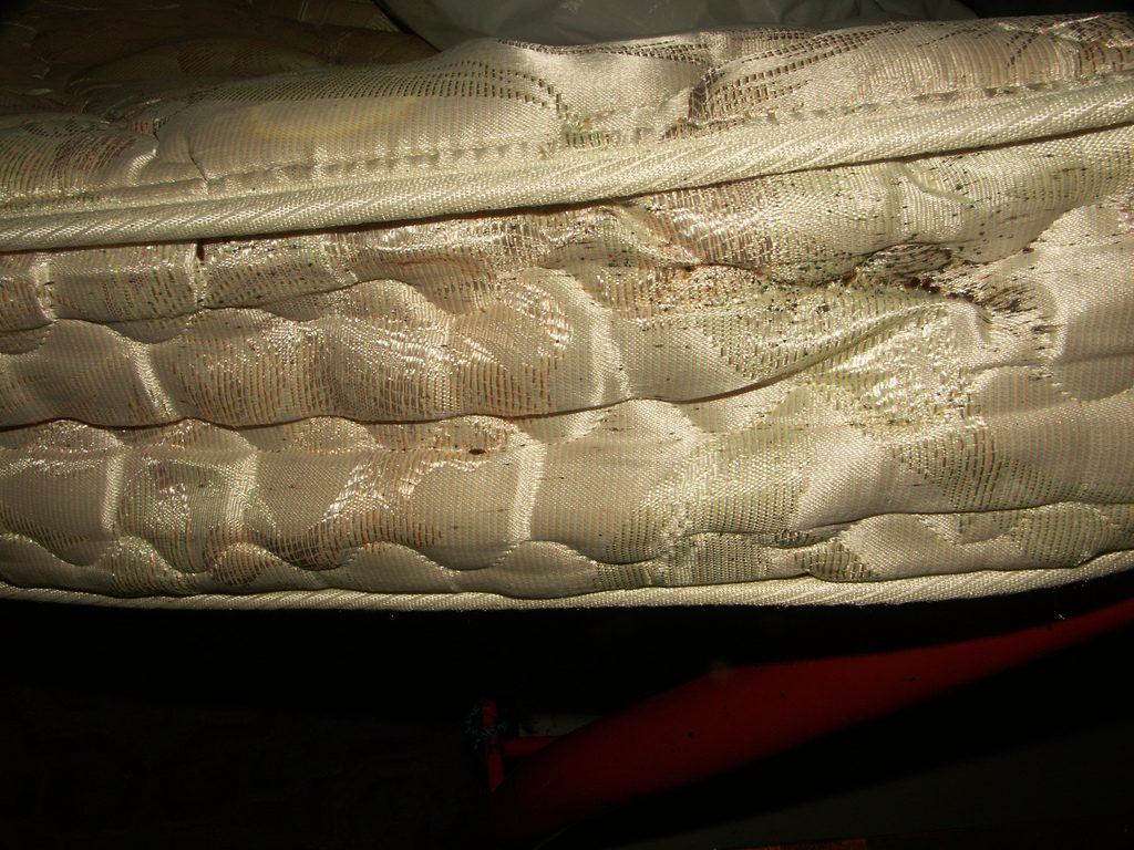 mattress with bed bugs