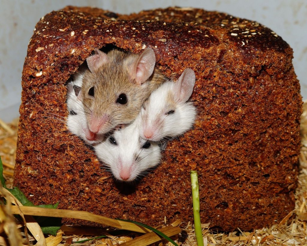 mice can squeeze in tight places