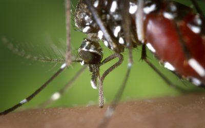 Mosquito Borne Illnesses In Indiana