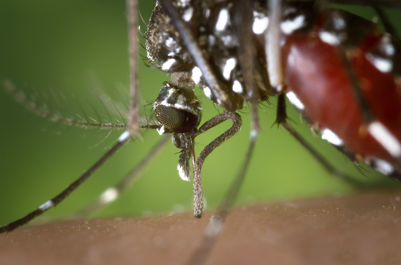 mosquito born illnesses