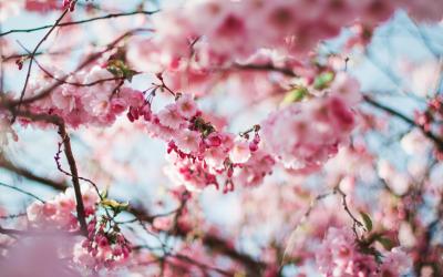 Pesky Spring Pests – Part 2