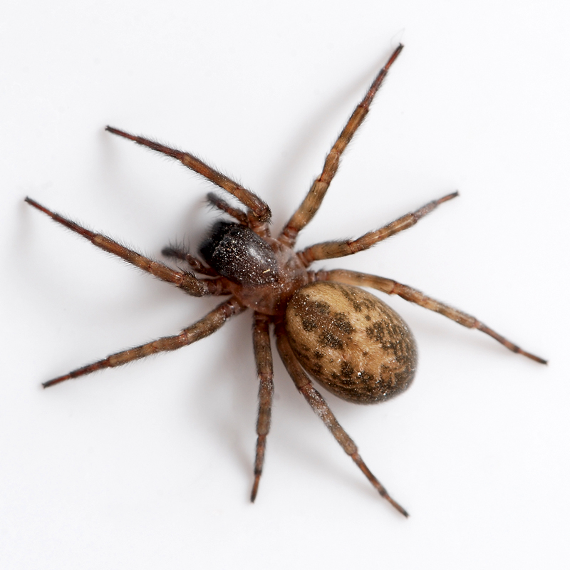 Spider Facts and House Pest Control Techniques