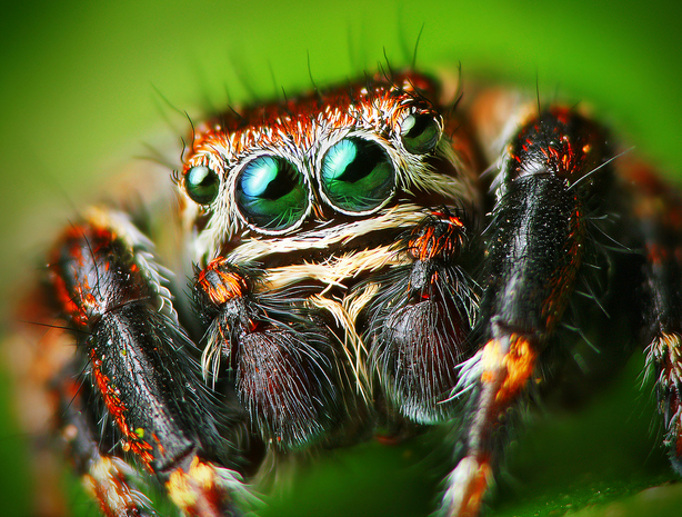 Fall Pest Guide: Spiders