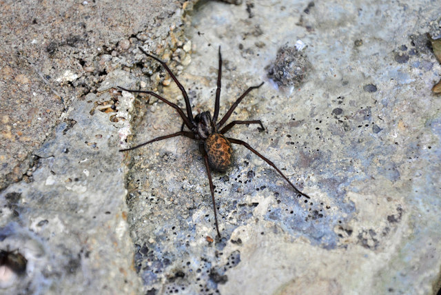 The Visibility of Spiders Increases in the Fall, According to Pest Control Technicians