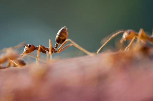 spring pest control - ants