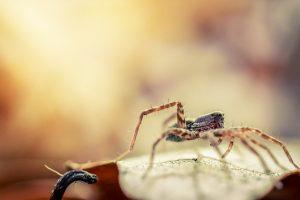 spring pest control - spider