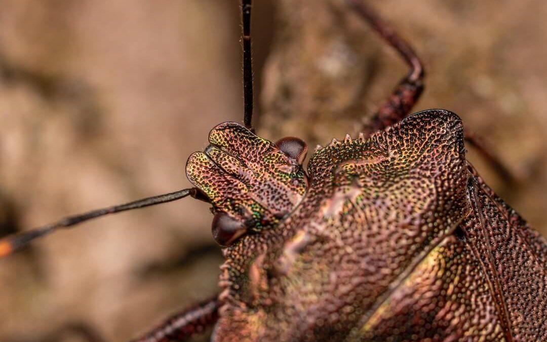 Top 10 Fall Pests