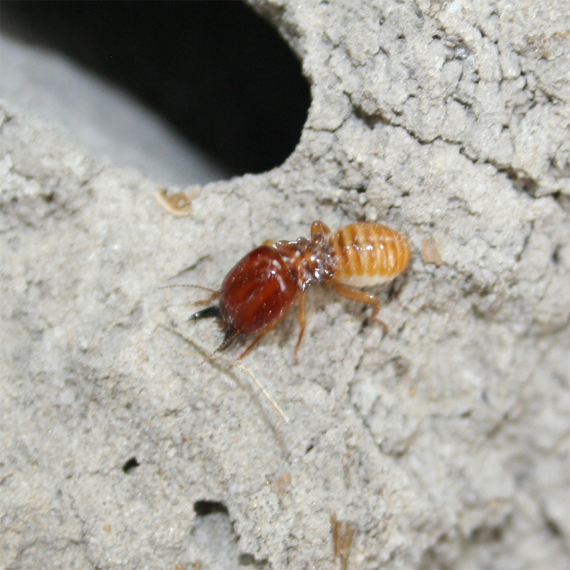 TERMITE CONTROL: Answers for Homeowners
