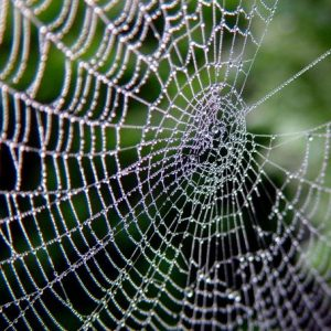 web-building-spiders-2