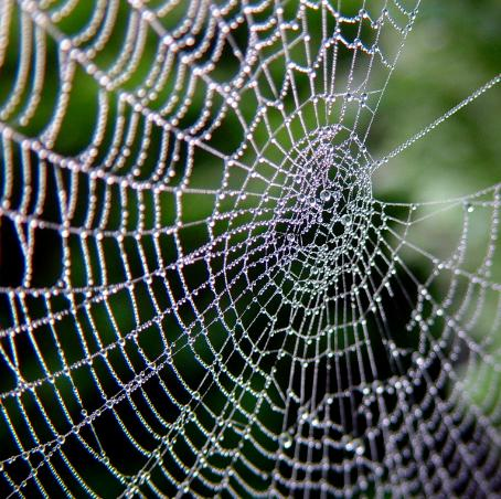 Common Web-Building Spiders – Part 2