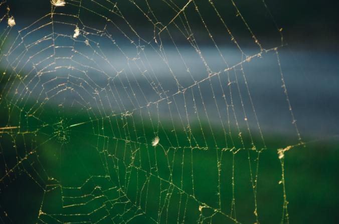 Common Web-Building Spiders – Part 1
