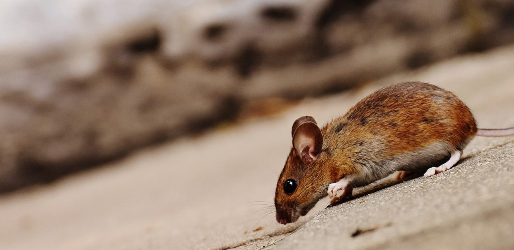 keep mice out this winter